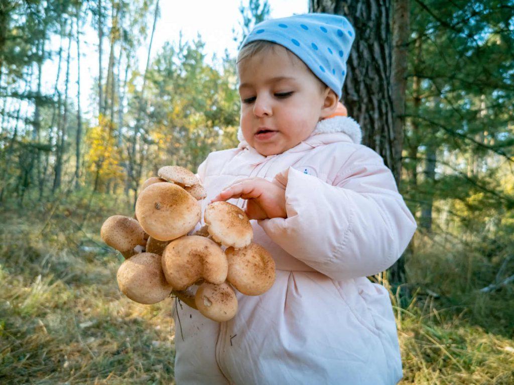 czy dzieci mogą jeść grzyby